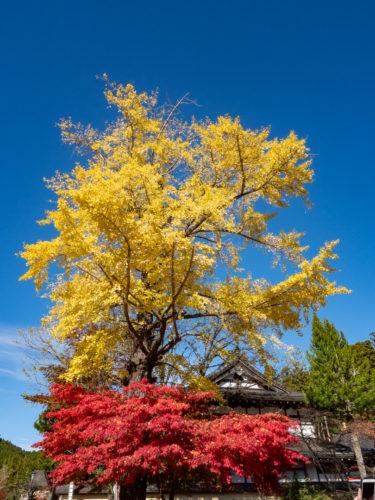 高野町の紅葉